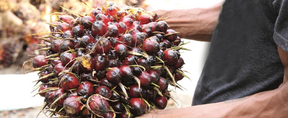 RSPO Piegādes ķēdes sertifikācija palmu eļļai