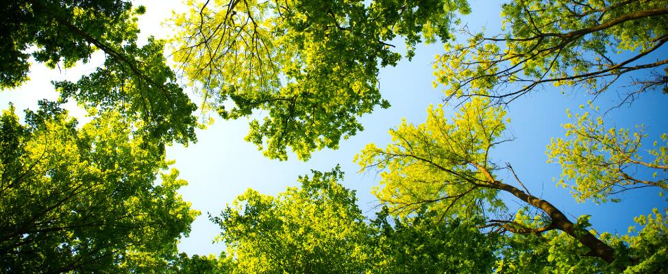 FSC<sup>®</sup> Koksnes piegādes ķēdes sertifikācija
