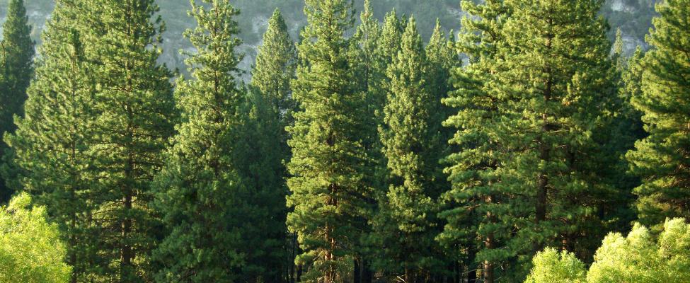 PEFC Koksnes piegādes ķēdes sertifikācija