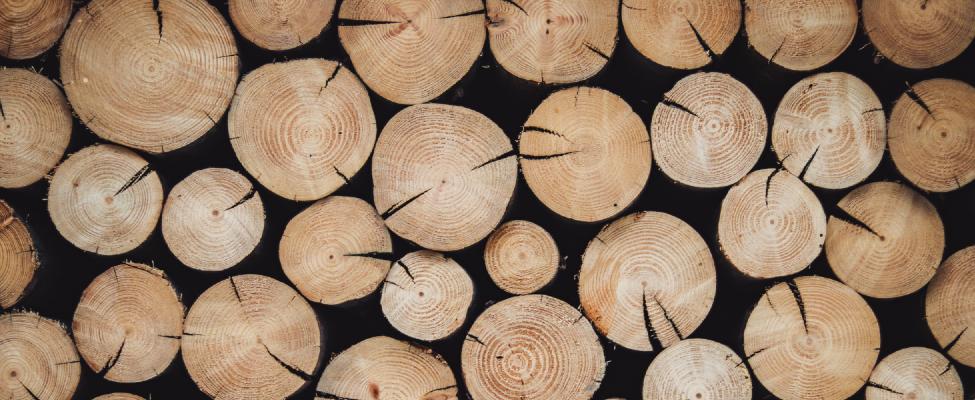 PEFC Meža apsaimniekošanas sertifikācija