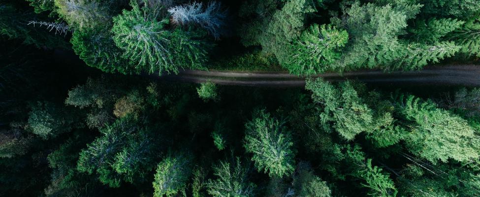 FSC<sup>®</sup> Mežu apsaimniekošanas sertifikācija