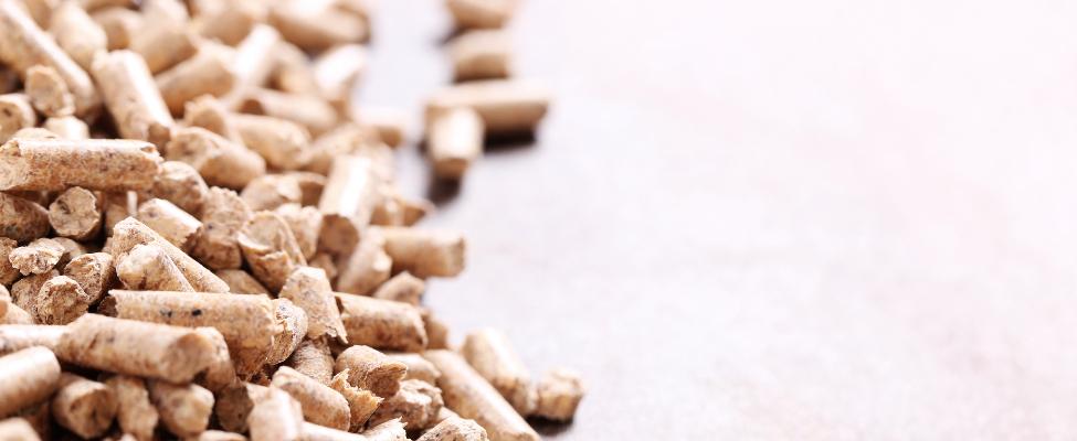 SBP Ilgtspējīgas biomasas programma